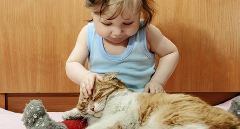 Девочка гладит кошку