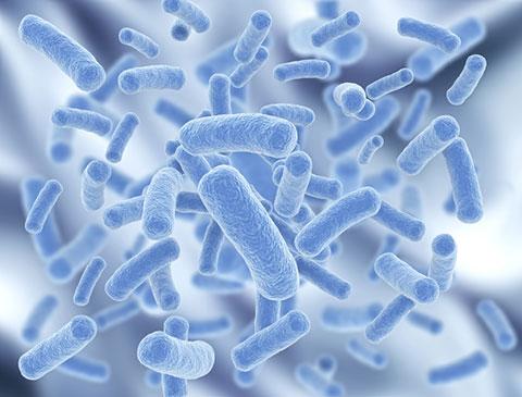 бактерии пробиотика