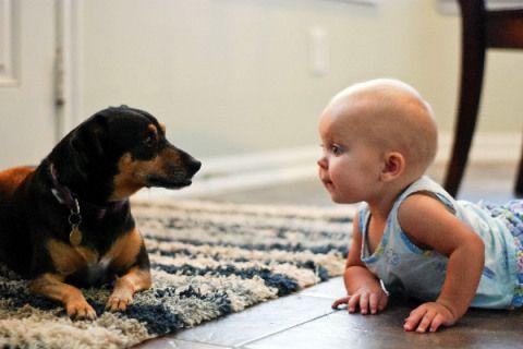 Грудничок и собака лежат на полу