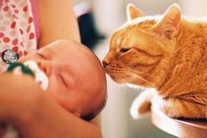 Кот нюхает голову грудничка