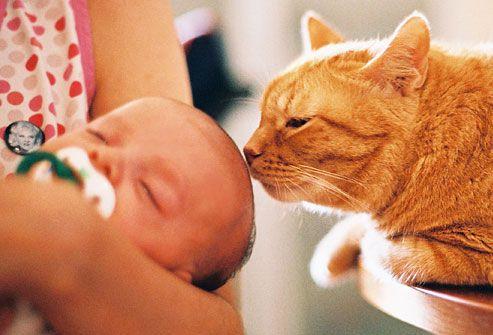Аллергия на шерсть животных у грудничков