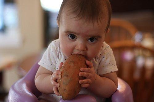 Малыш грызет картошку