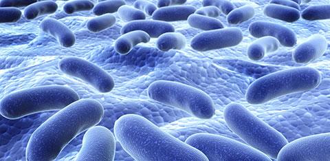 бактерии пребиотика