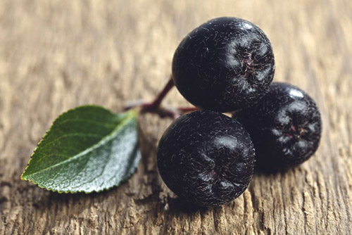 черноплодная рябина вред