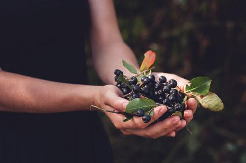 Разрешено ли кормящей маме употреблять в пищу черноплодную рябину?